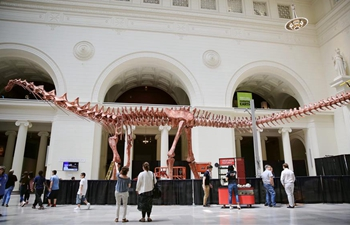 Model of Patagotitan mayorum to be on display at Field Museum in Chicago