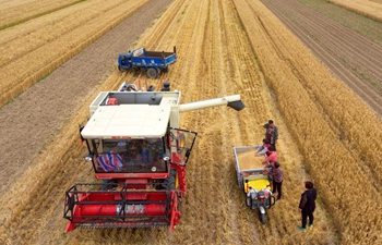 Wheat harvest view in China's Shanxi