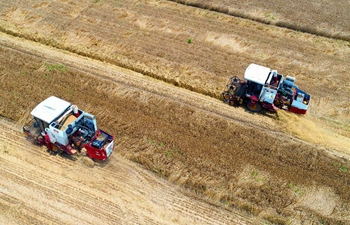 Wheat enters harvest season in many areas around China