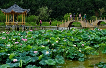 Scenery of lotus pond in Wuyishan, SE China's Fujian Province