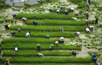 Farmers busy with field work before deadline for sowing activities across China
