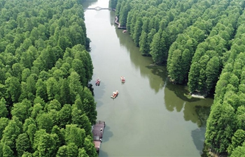 Aquatic forest park in Xinghua, E China's Jiangsu