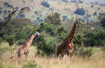 In pics: wildlife at Akagera National Park in Rwanda