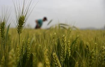 Farmers work in fields across China