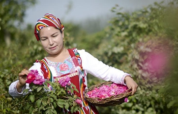 Rose industry increases income of people in Hotan, China's Xinjiang