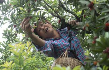 Waxberry enters harvest season in China's Zhejiang