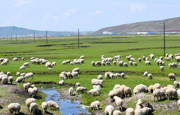 Scenery of Hulunbuir grassland in China's Inner Mongolia