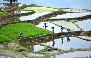 Farmers work in terraced fields in S China's Guangxi