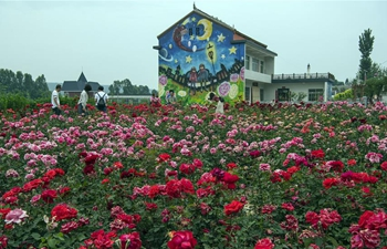 Rose town attracts large number of tourists in NW China's Shaanxi