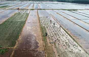 Farmers work in field in Linyi City, east China's Shandong