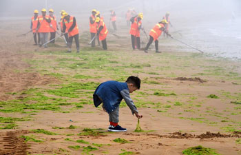 Workers clear enteromorpha along beach in China's Qingdao