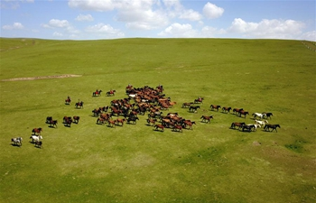 Grassland scenery of in Shandan Horse Ranch in NW China's Gansu