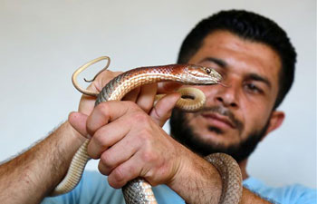 Feature: For Palestinian man in Gaza, even raising pet snakes is not a cheap hobby