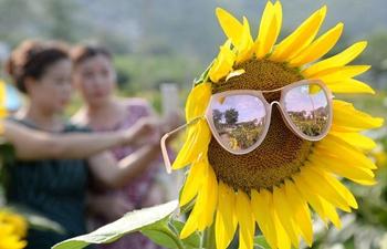 Scenery of sunflowers in Handan City, north China