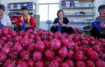 Dragon fruit planting helps farmers increase incomes in east China's Zhejiang