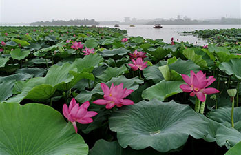 Tourists enjoy lotus at Nanhu Park in Hebei