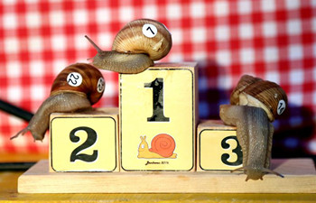 7th Croatian Snail Race Championship held in Benkovac, Croatia