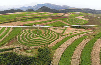 Scenery of buckwheat farm in China's Guizhou
