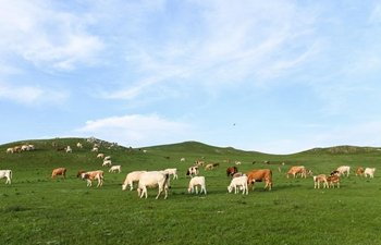 Grassland scenery of Xilingol, north China's Inner Mongolia