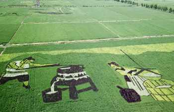 Rice paddy art pictures shown in east China's Anhui