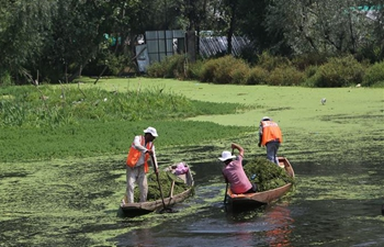 Workers clean up Dal Lake for tourist attraction in Srinagar city