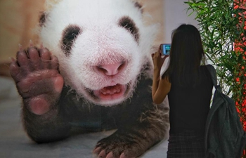 1st China Giant Panda Int'l Culture Week held in Beijing