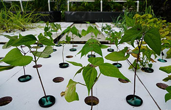 In pics: outdoor aquaponics farm in Brooklyn, New York