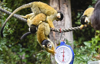 Annual weigh-in held at ZSL London Zoo