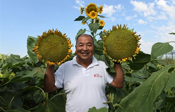 Sunflower seed products of Wuyuan County sold to overseas markets