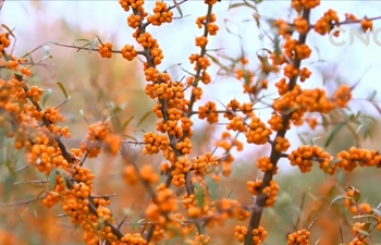 Ningxia 60 Years | Pursuit of Green Environment