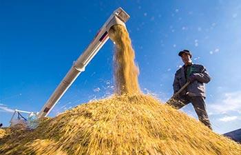 Rice enters harvest season in China's Jilin