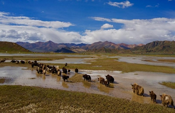 Environment greatly improved along Yarlung Zangbo River in China's Tibet