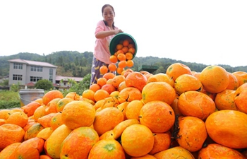 China embraces autumn harvest