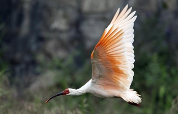 Various wild birds seen across China
