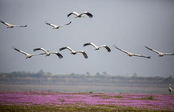 Migratory birds settle around Poyang Lake to escape chilly weather