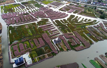 Flowers bloom in E China's Jiangsu