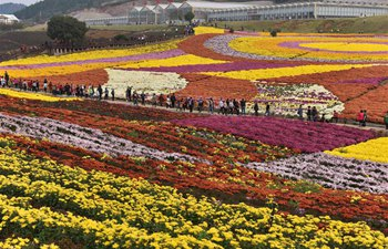 People enjoy chrysanthemum flowers across China