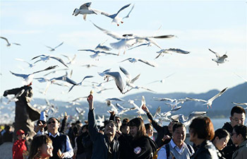 Red-billed gulls fly to Kunming to live through winter