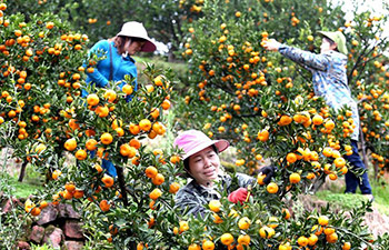 Oranges harvested in east China's Jiangxi