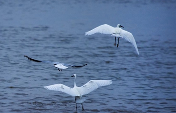 China's largest freshwater lake sees flock of migratory birds