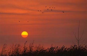 Sunrise in Baiyangdian of Anxin County, Xiongan New Area