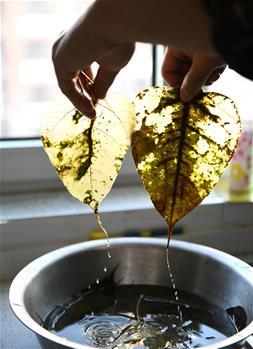 In pics: leaf carving artist Dang Zhihong