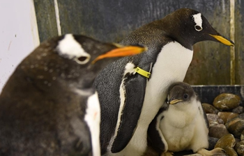 Harbin Polarland has new batch of penguins hatch