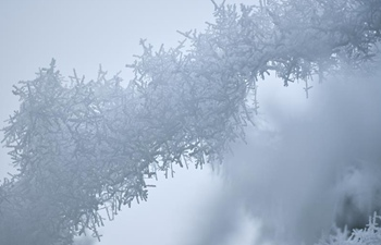 In pics: rime scenery across China