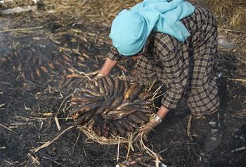 Kashmiri women prepare smoked fish for upcoming winter