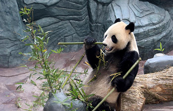 Giant pandas arrive in Huangshan, east China's Anhui