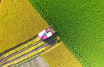 In pics: agriculture sector mechanization rate exceeds 66 pct in China