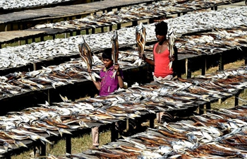 People busy with drying fish in Cox's Bazar, Bangladesh