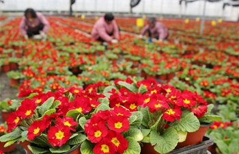 Potted plants enter season of sales in China's Jiangsu