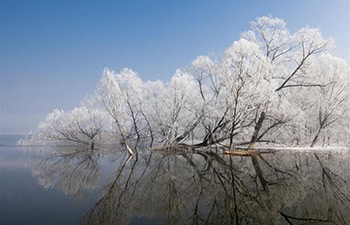 Frosty scenery seen in Tianjin